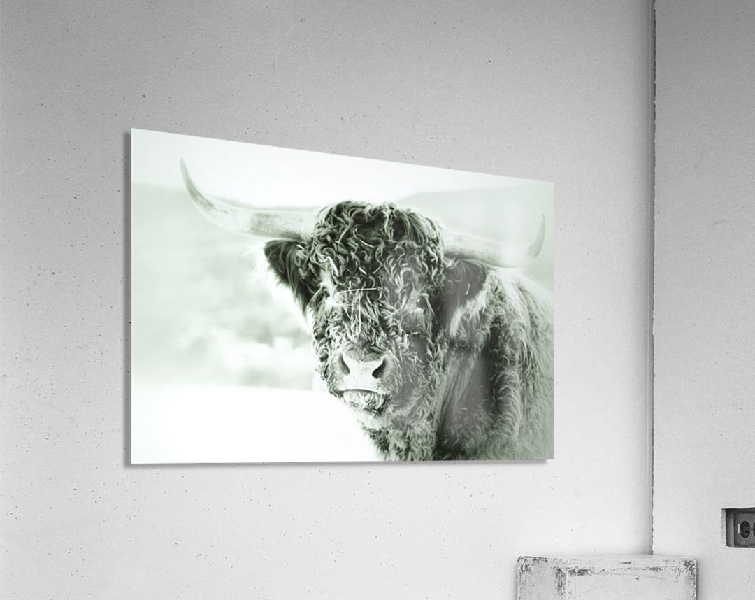 Grosse bete  Acrylic Print
