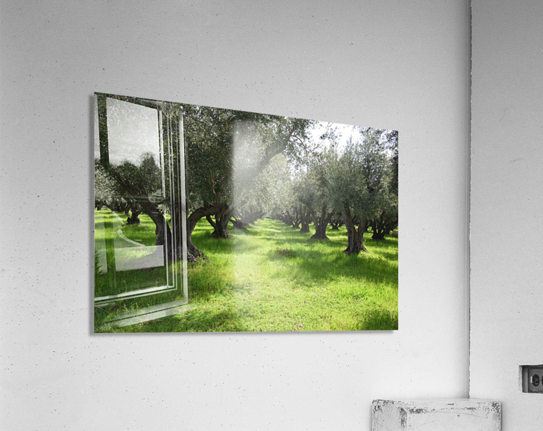 Olive Orchard In Spring  Acrylic Print
