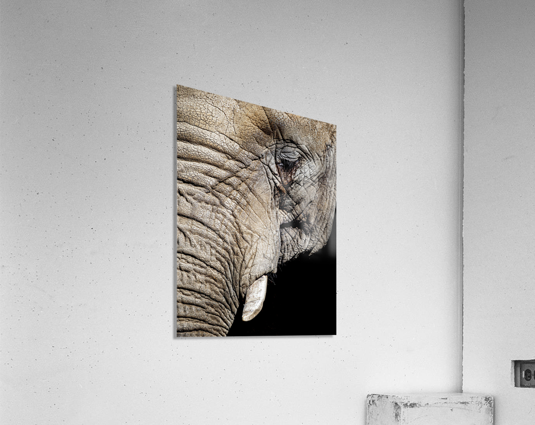 Elephant Close Up  Acrylic Print