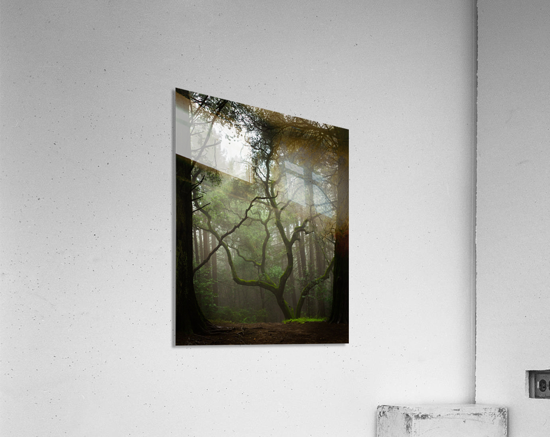 Clearing in the Woods  Acrylic Print