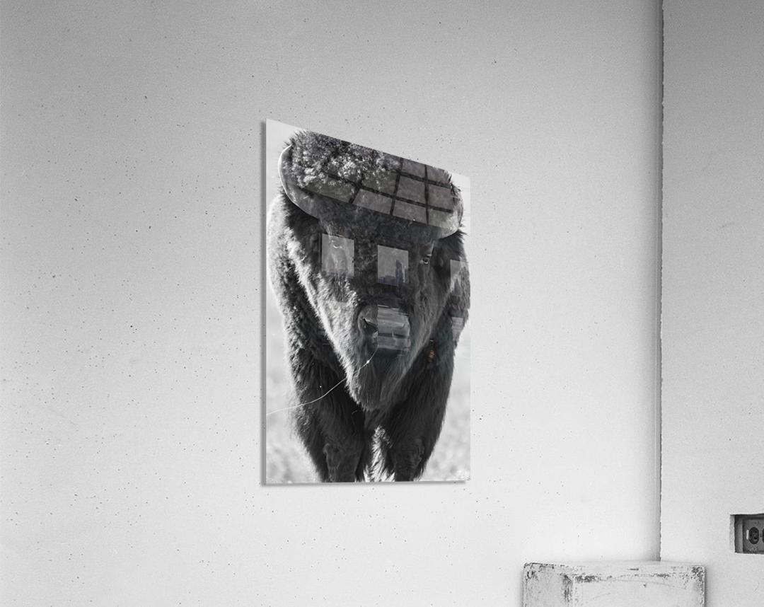 7893 - Buffalo  Acrylic Print