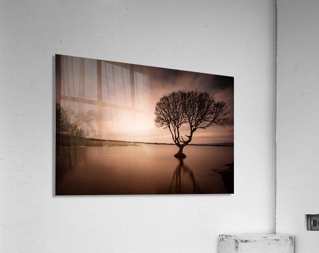 The Kenfig Tree  Acrylic Print