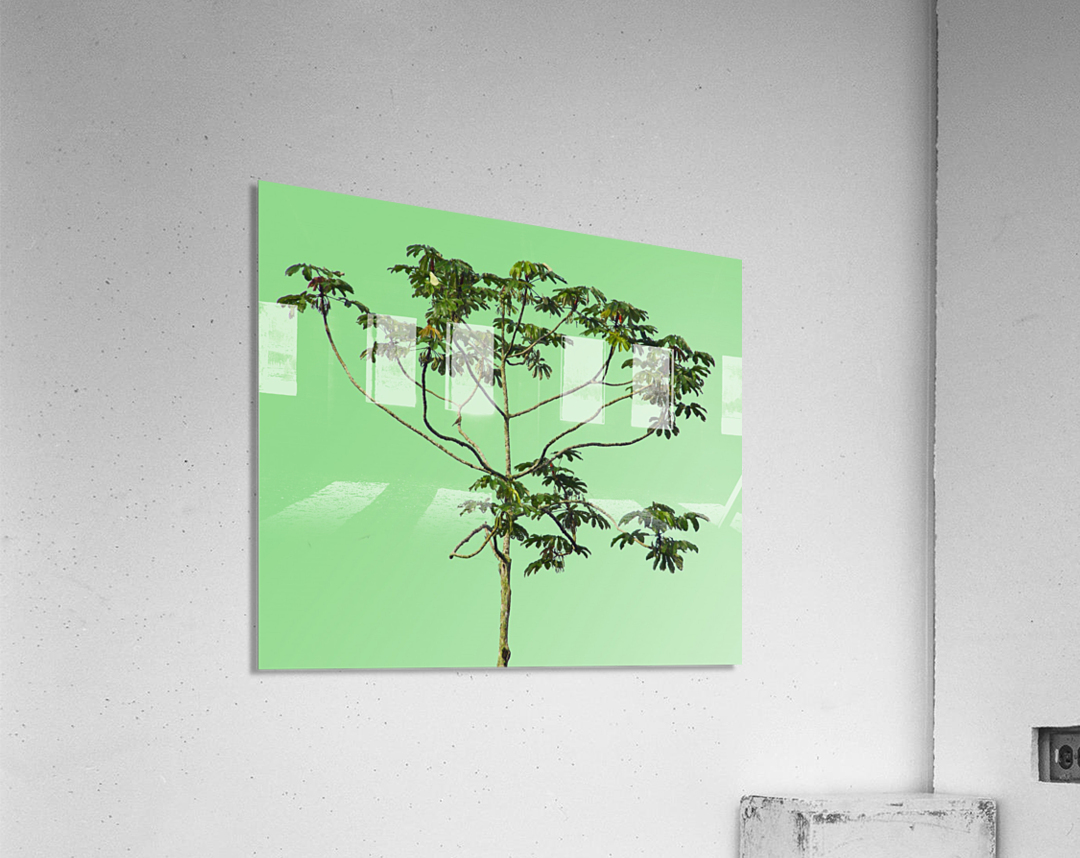 Nature - XIII  Acrylic Print