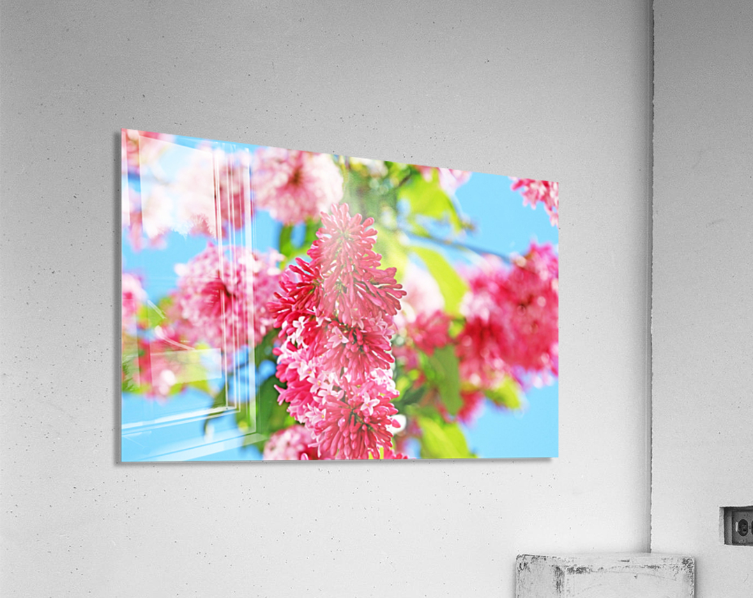 Sweet Side Of Red  Acrylic Print