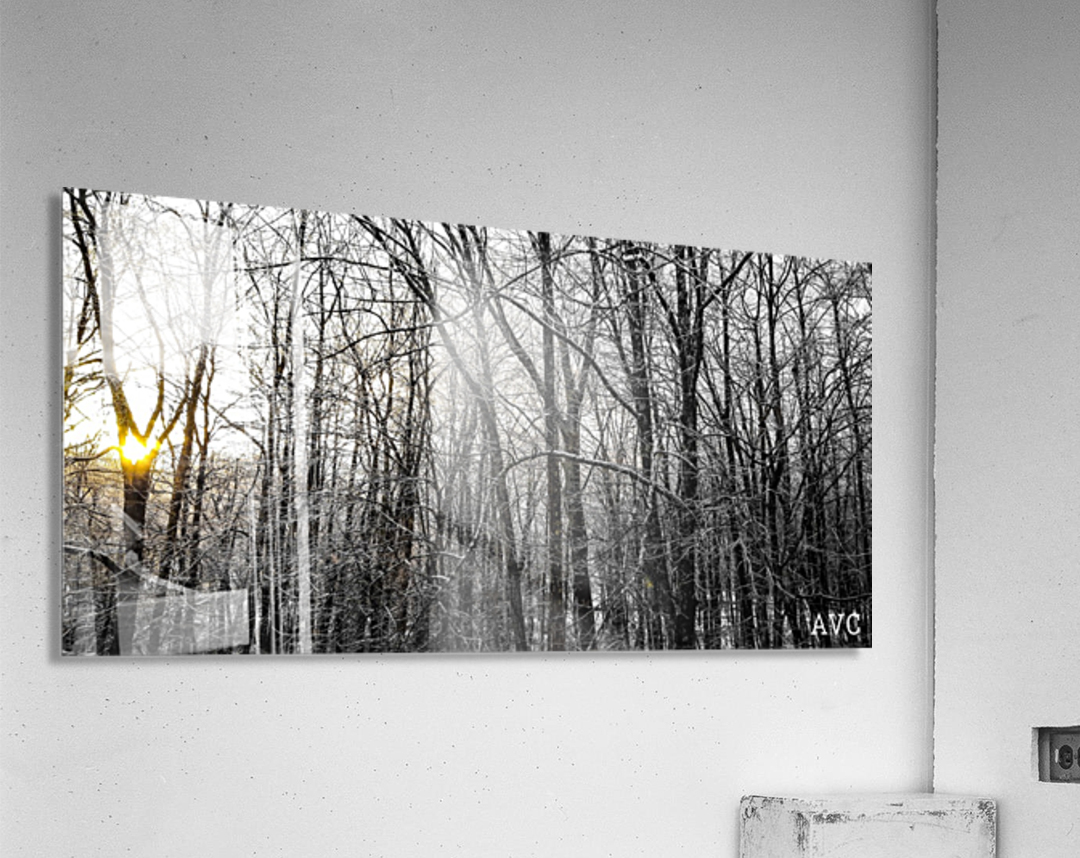 Through the Icy Trees  Acrylic Print