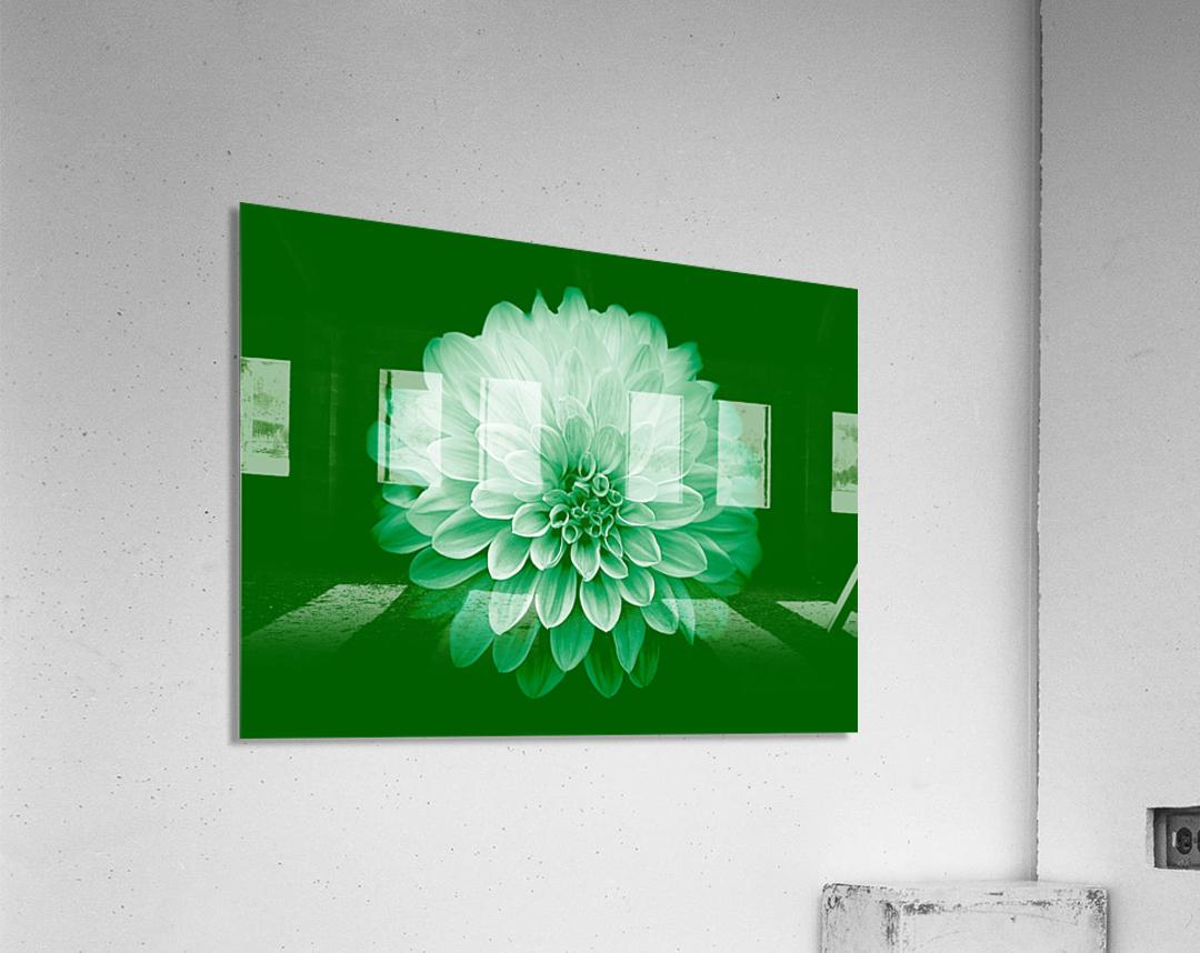 Dahlia on Green  Acrylic Print