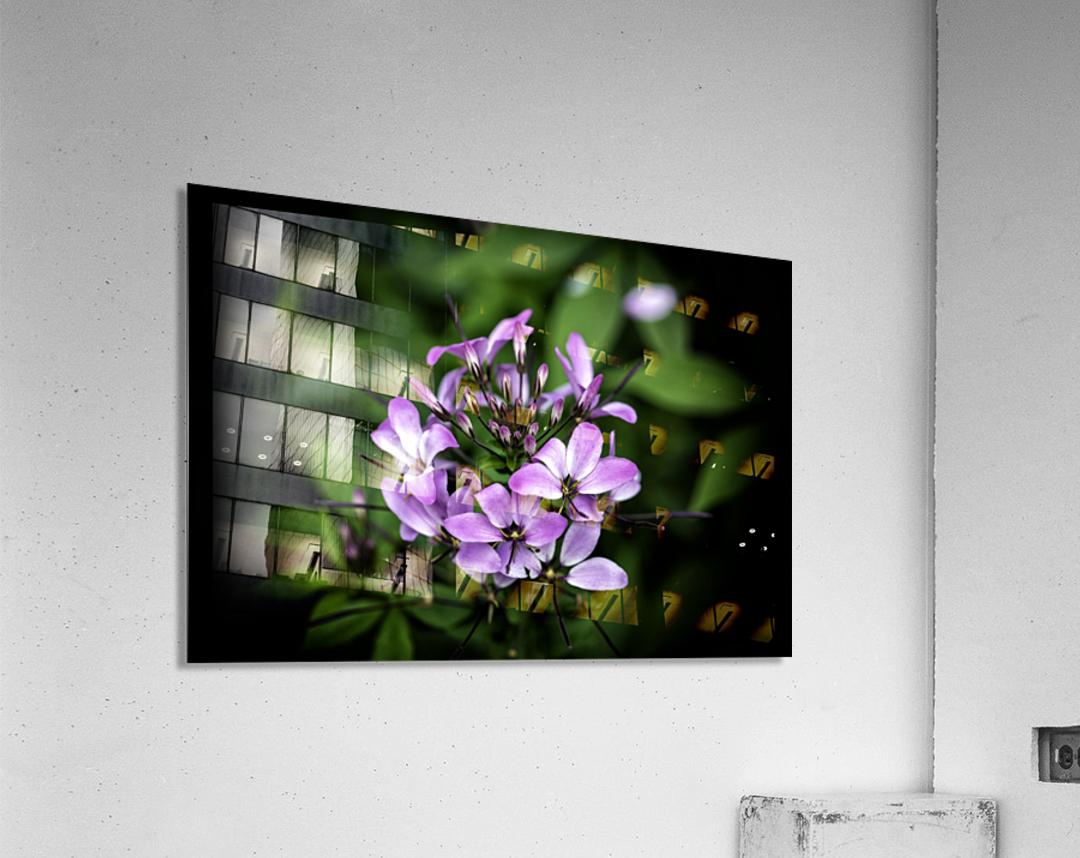 Beeplant  Acrylic Print