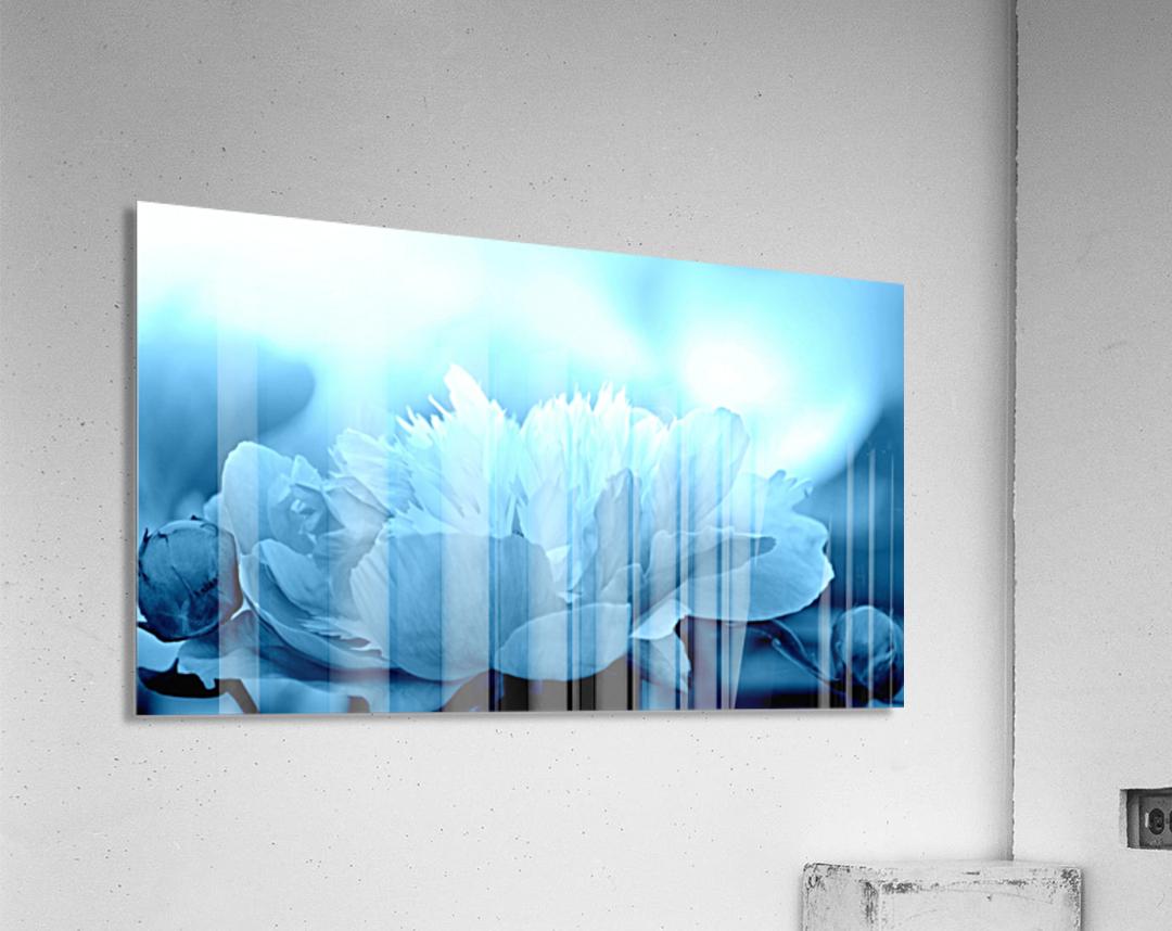 Heavenly Peony Aqua Blue  Acrylic Print
