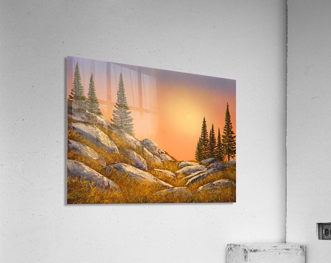Sunset Spruces  Acrylic Print