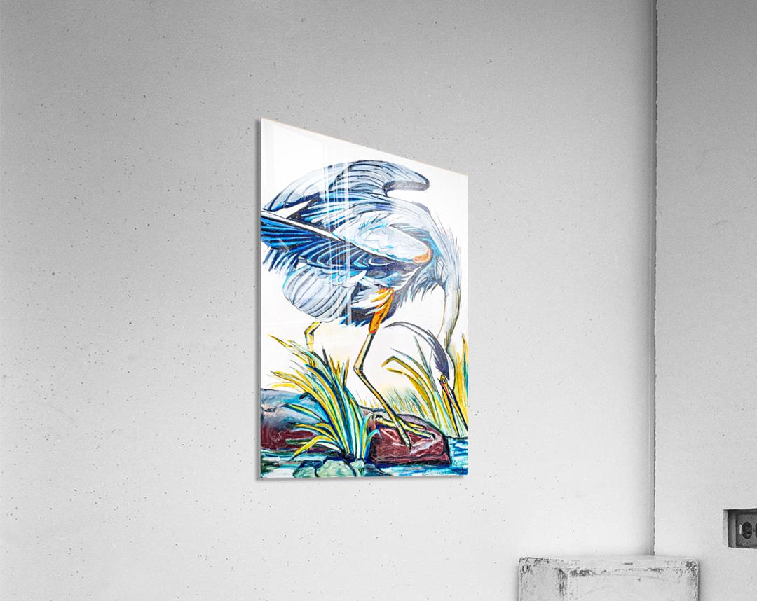 Louisiana Blue Heron Catching Fish- Bright  Acrylic Print