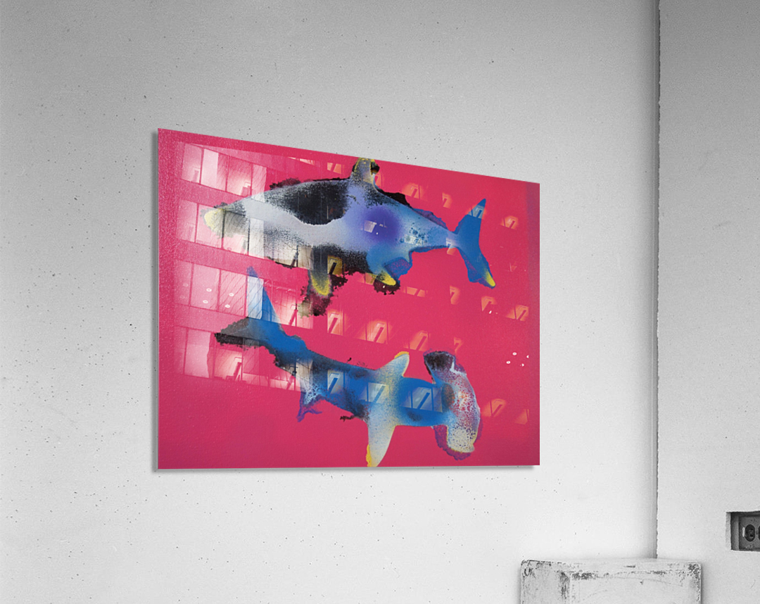 TWO HUNGRY SHARKS  Acrylic Print