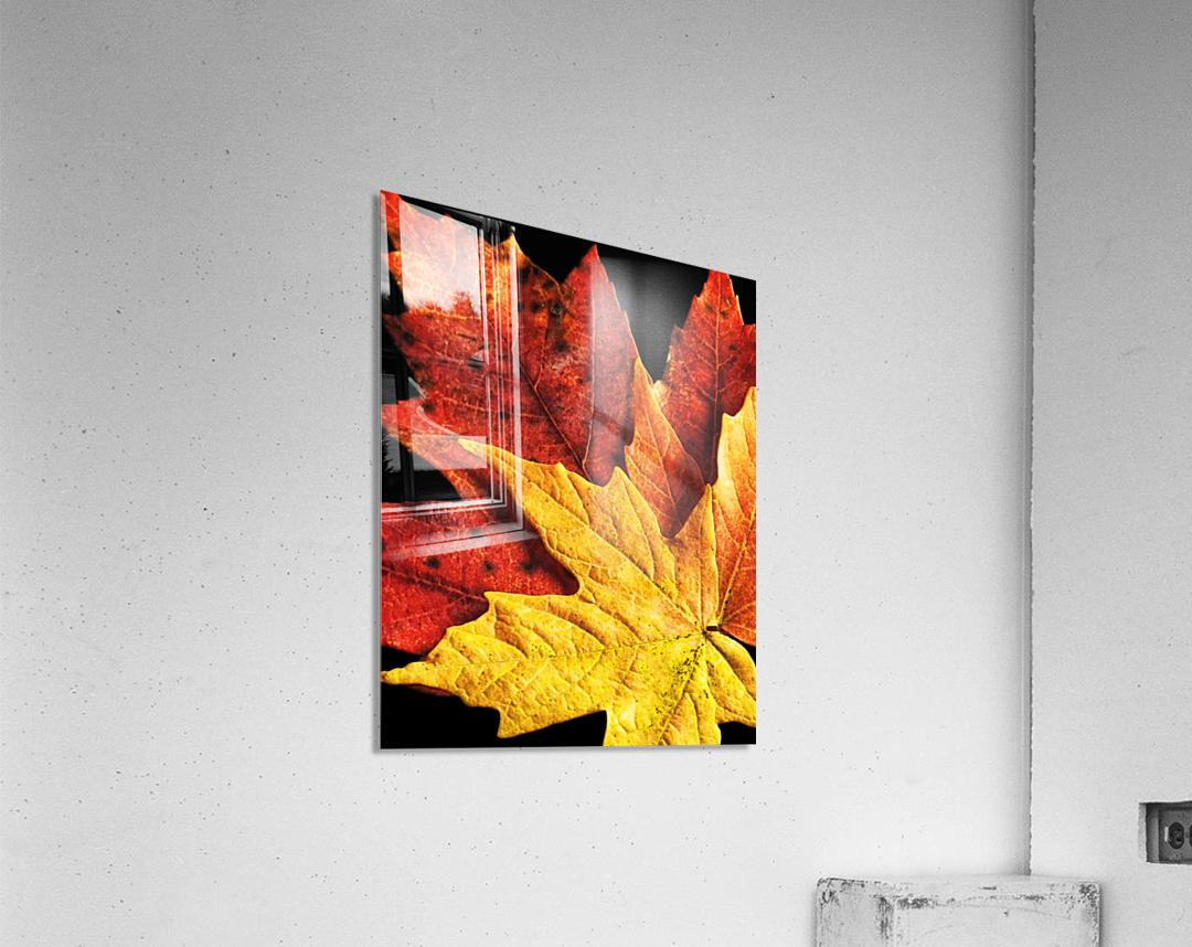 Fall Maple Leaves 2  Acrylic Print