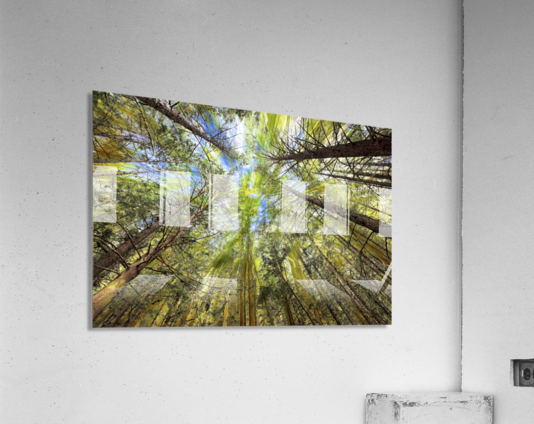 Forest Particles  Acrylic Print