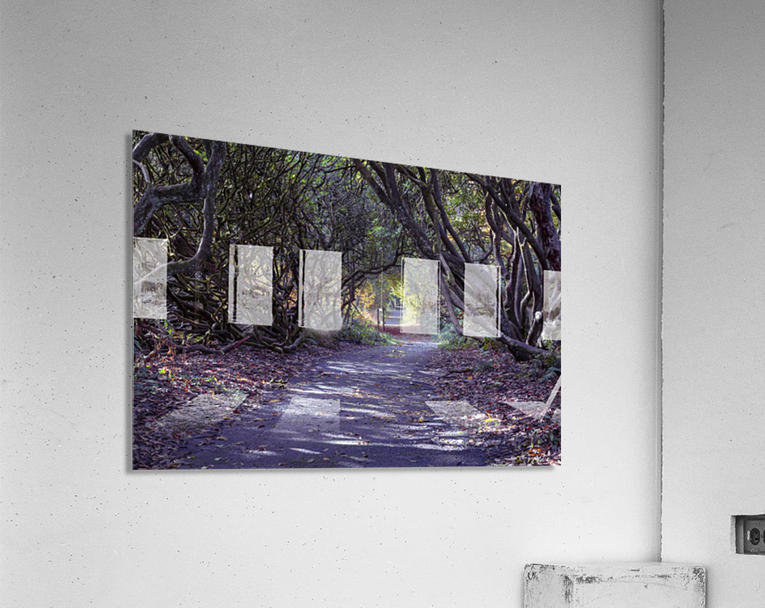 Tree lined Rhododendron walkway  Acrylic Print