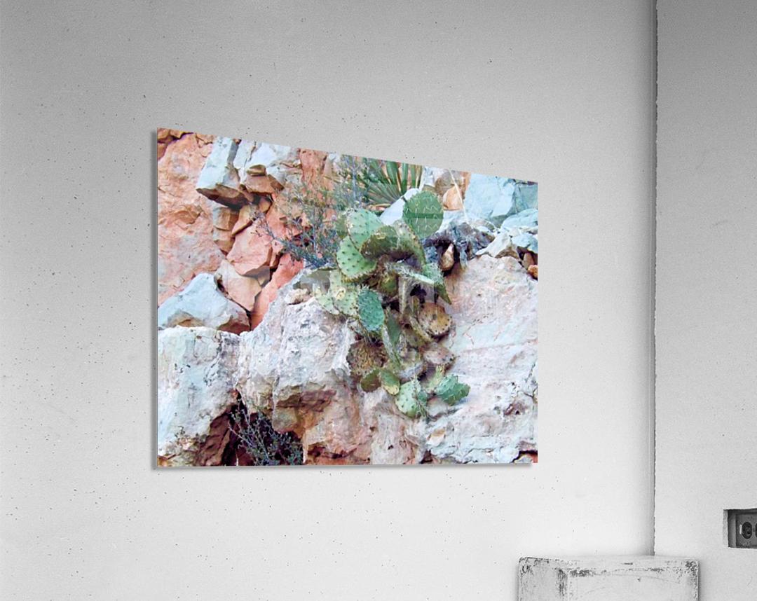 Cactus  Impression acrylique