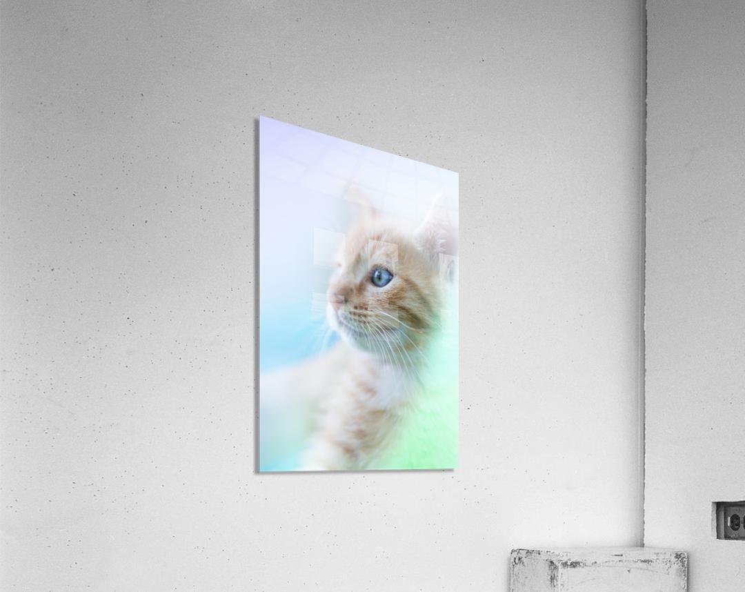 catshadow  Acrylic Print