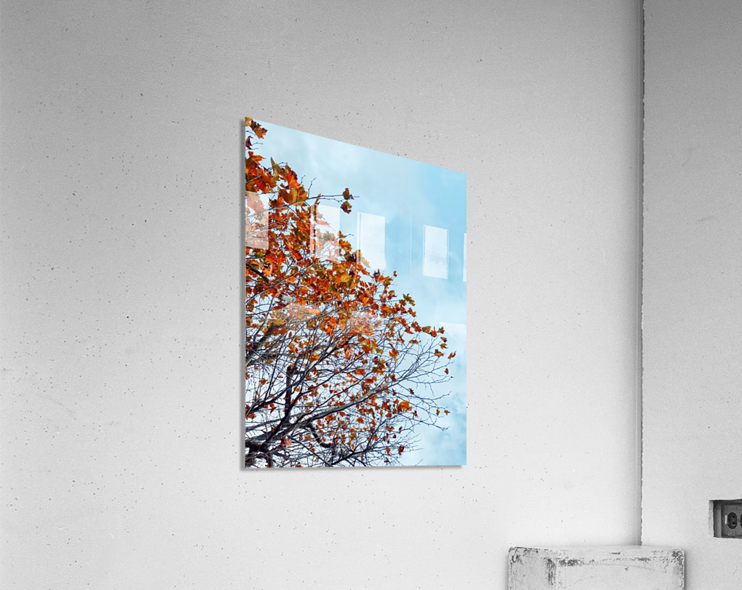 Tree branch with orange autumn leaves and blue cloudy sky  Acrylic Print