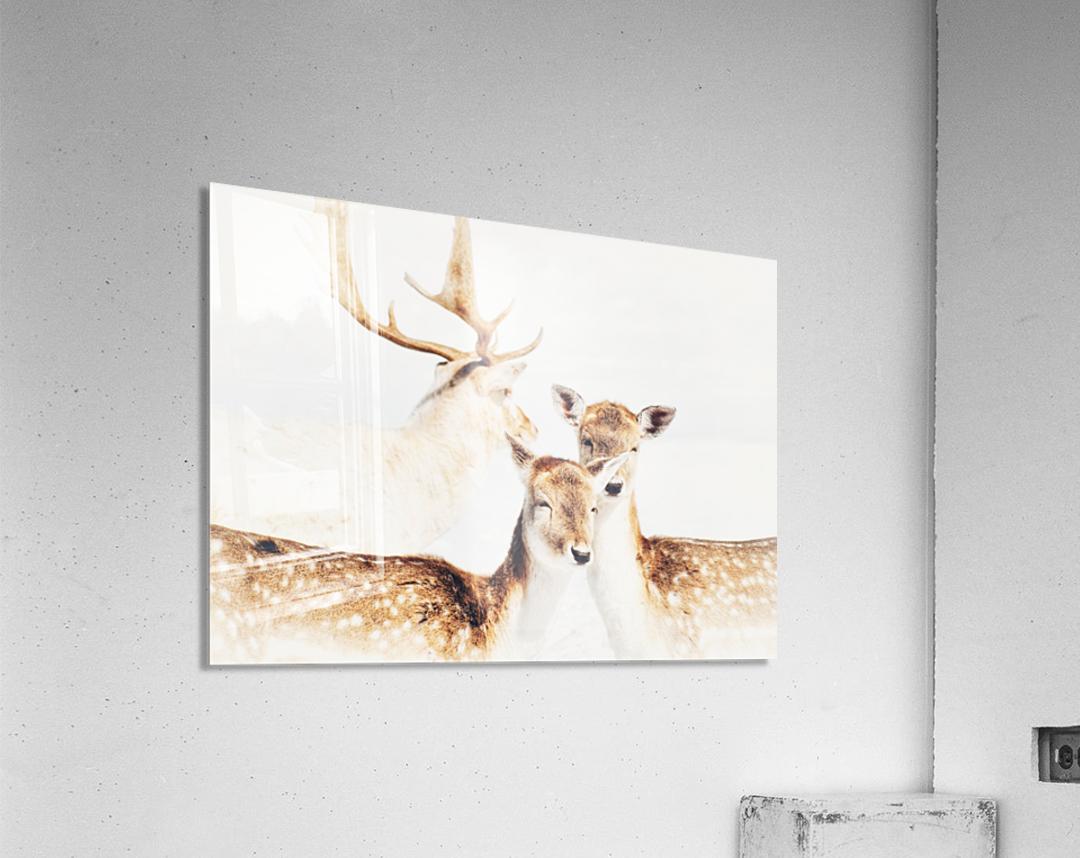 Douceurs  Acrylic Print