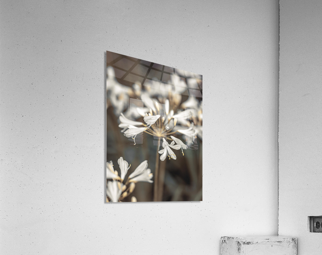African Lilies  Acrylic Print