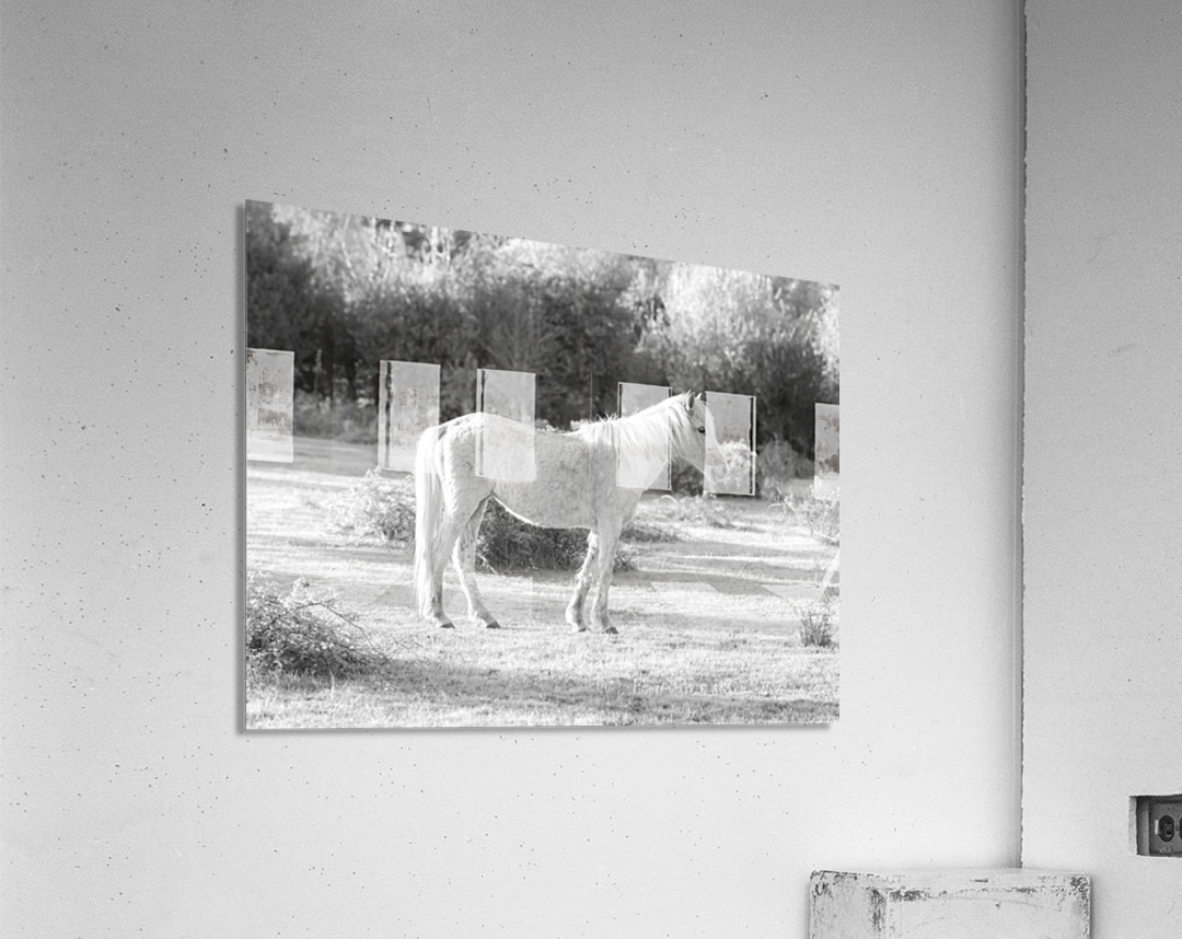 Horses at the New Forest, UK  Acrylic Print