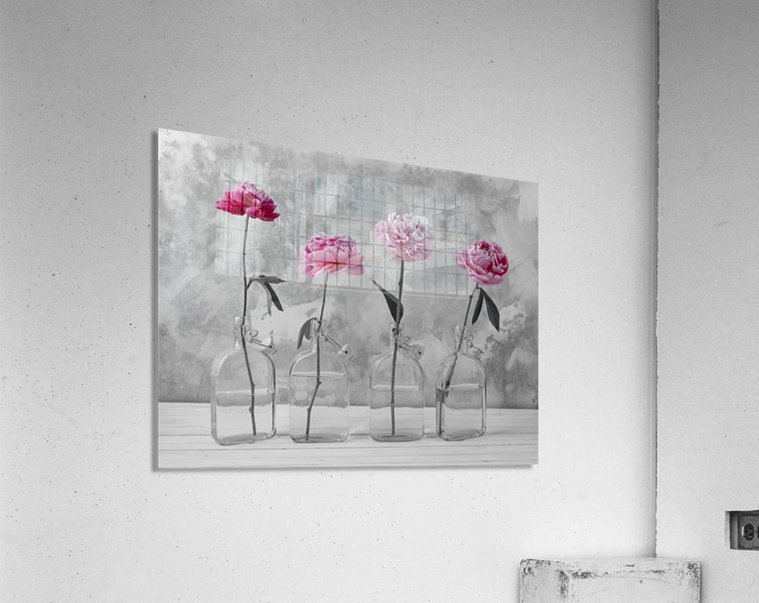 Peonies in glass bottles  Acrylic Print