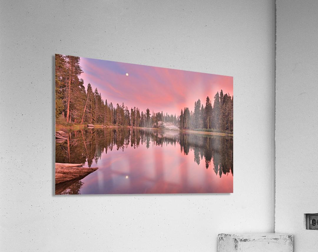 Azalea Sunset  Acrylic Print