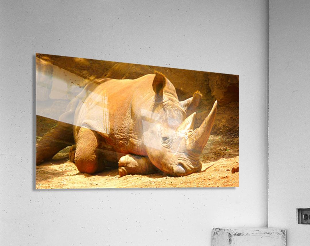 Rhino - Natural World Kids Gallery  Acrylic Print