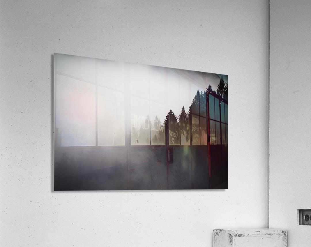Pine trees in the fog  Acrylic Print