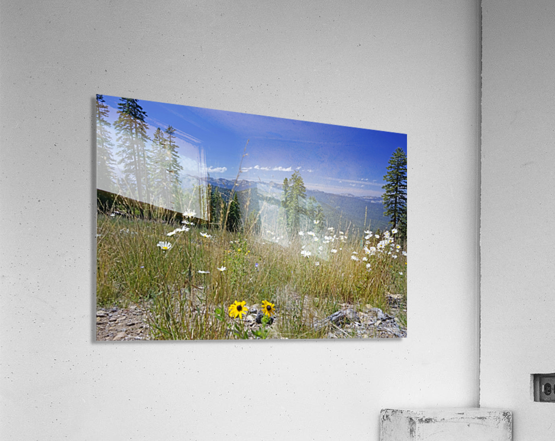 Sierra Nevada in Spring 5 of 8  Acrylic Print