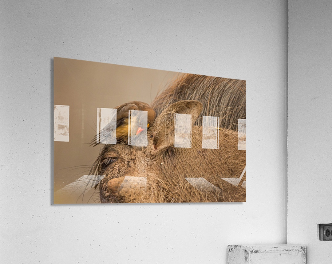 Hideaway by Jaco Marx   Acrylic Print