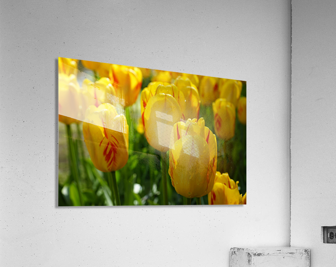 Spring Blooms of Holland 1 of 8  Acrylic Print