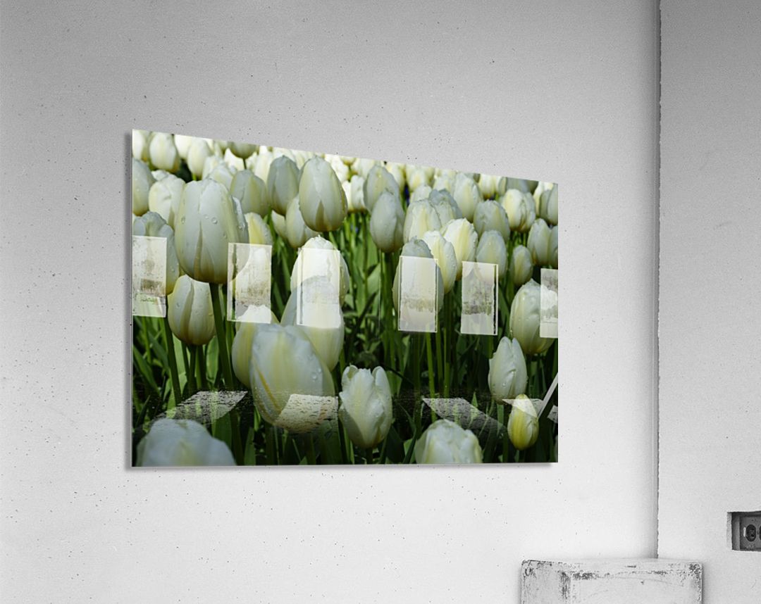 Spring Blooms of Holland 2 of 8  Acrylic Print
