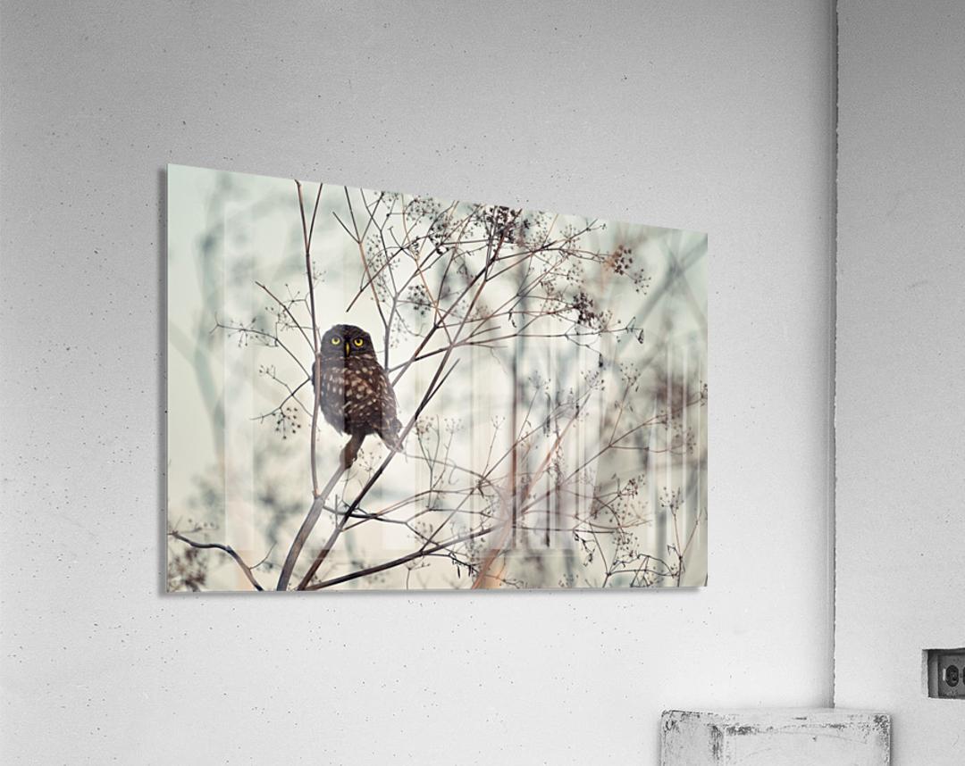 Look at Me  Acrylic Print