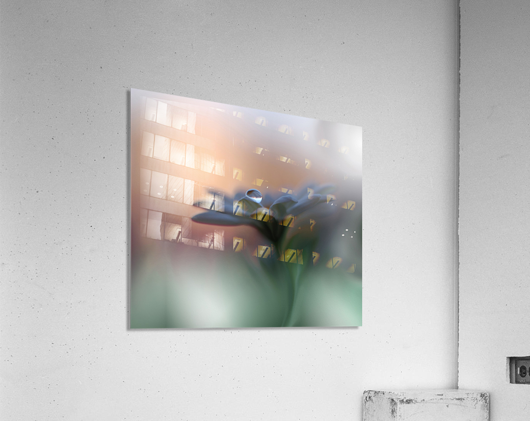 Eyes of the Light by Juliana Nan   Acrylic Print