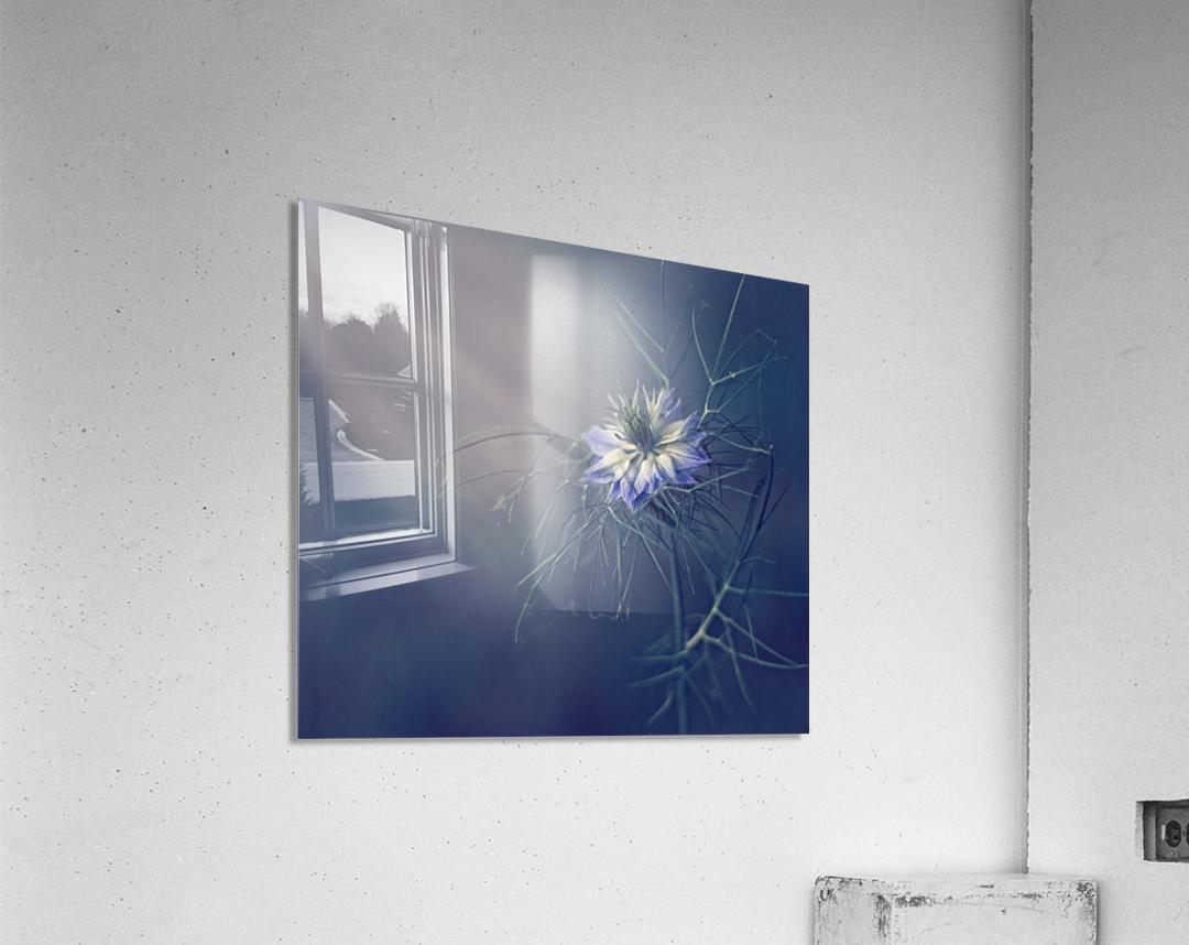 ....*  Acrylic Print