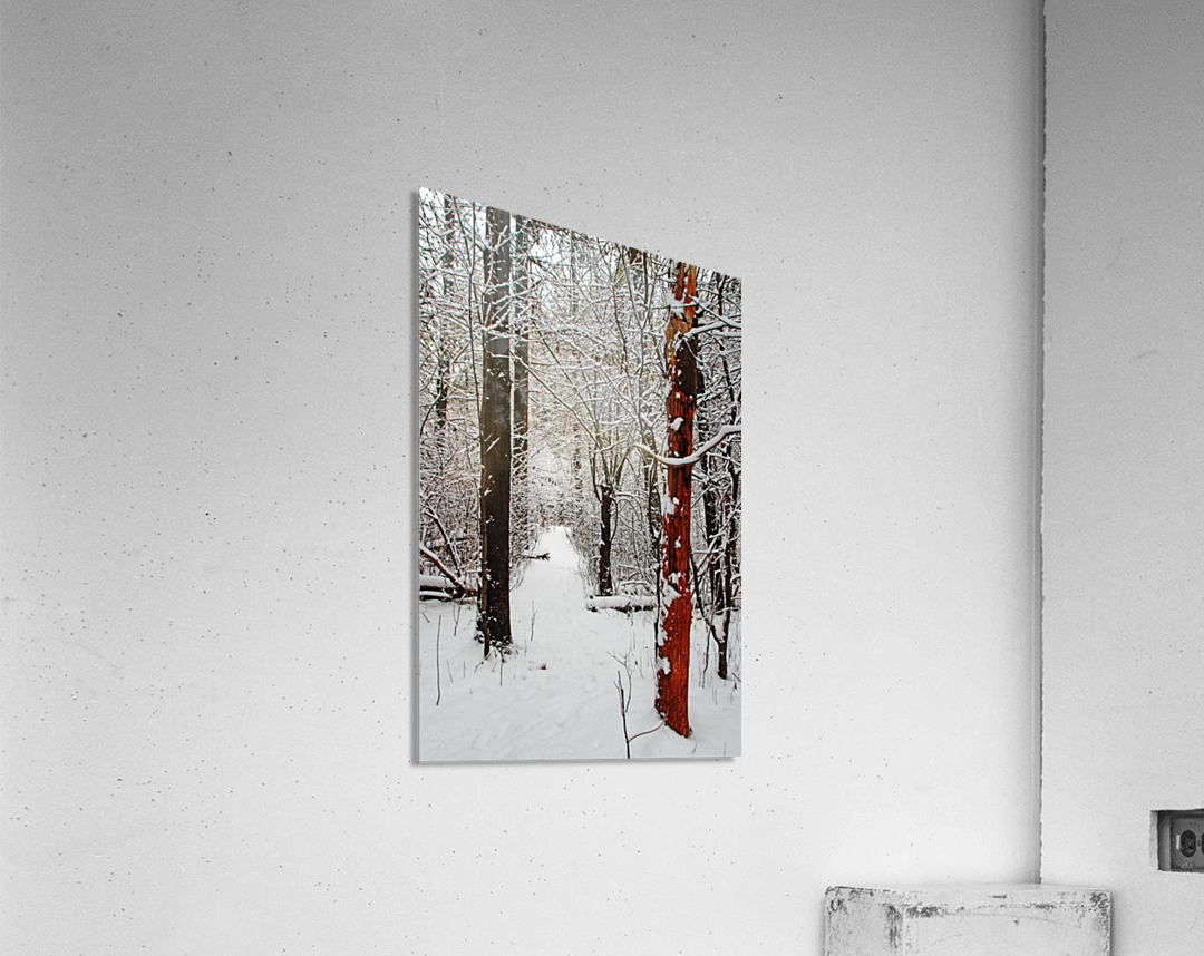 Decked In Snow  Acrylic Print