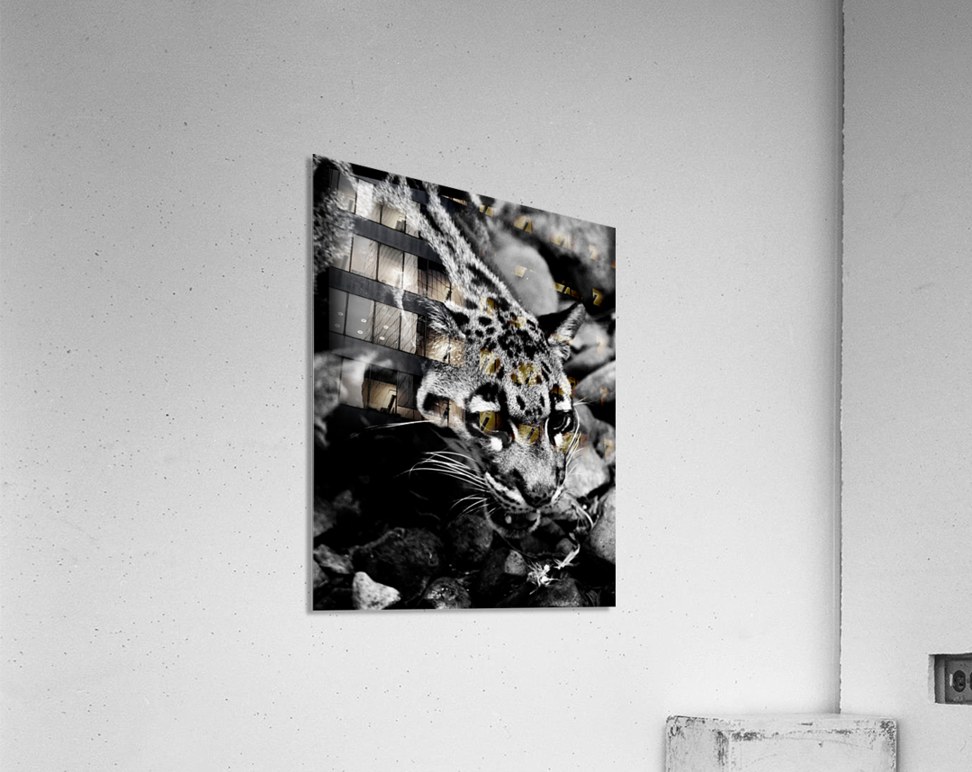 SPOTTED CAT  Acrylic Print