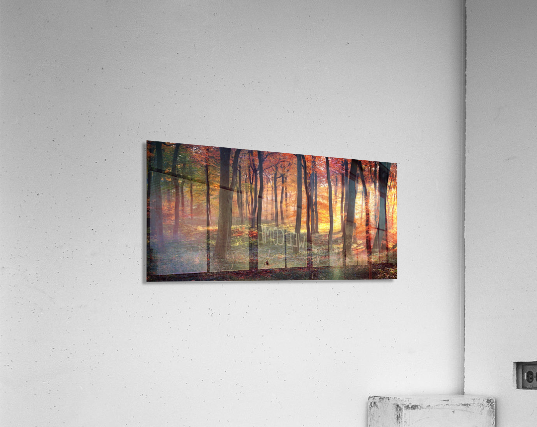 Autumn Woodland Sunrise  Acrylic Print