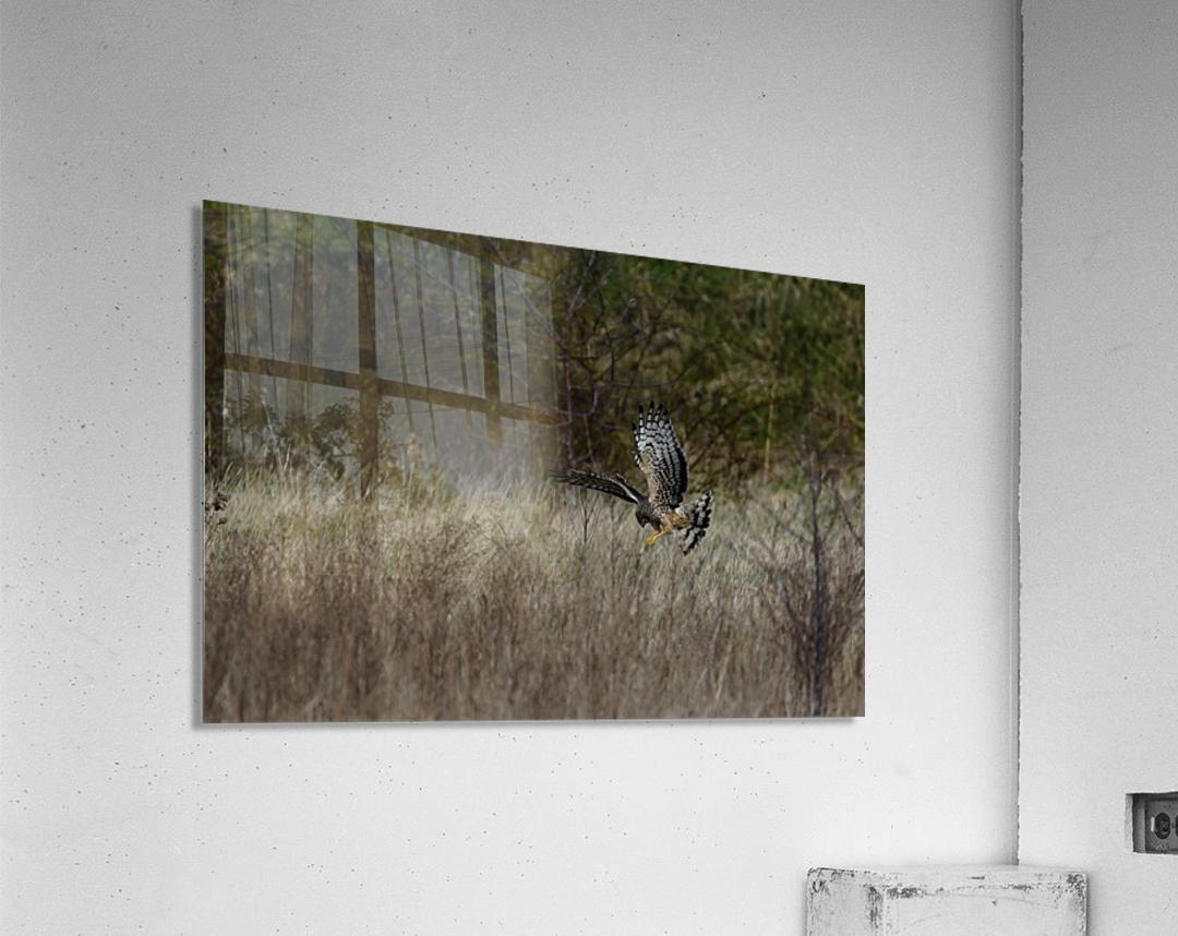 Wesley Allen Shaw 01906  Acrylic Print