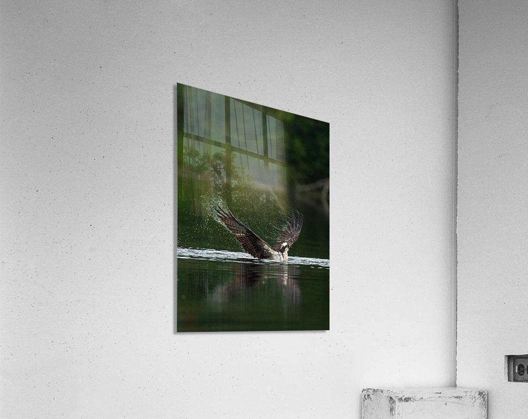 Wesley Allen Shaw 01134  Acrylic Print