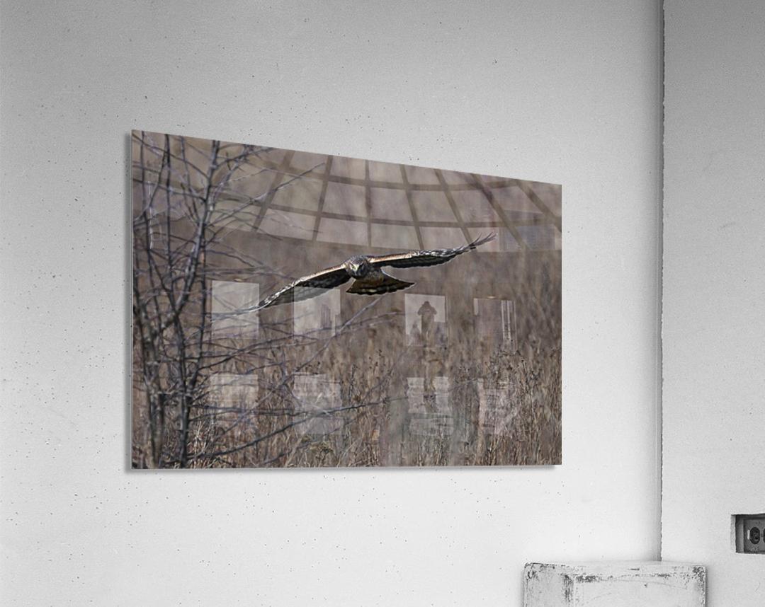 Wesley Allen Shaw 02102  Acrylic Print