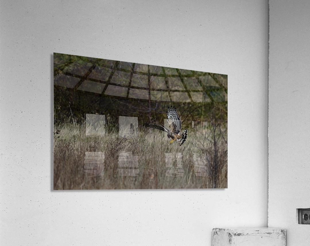 Wesley Allen Shaw 01906 1609735001.972  Acrylic Print
