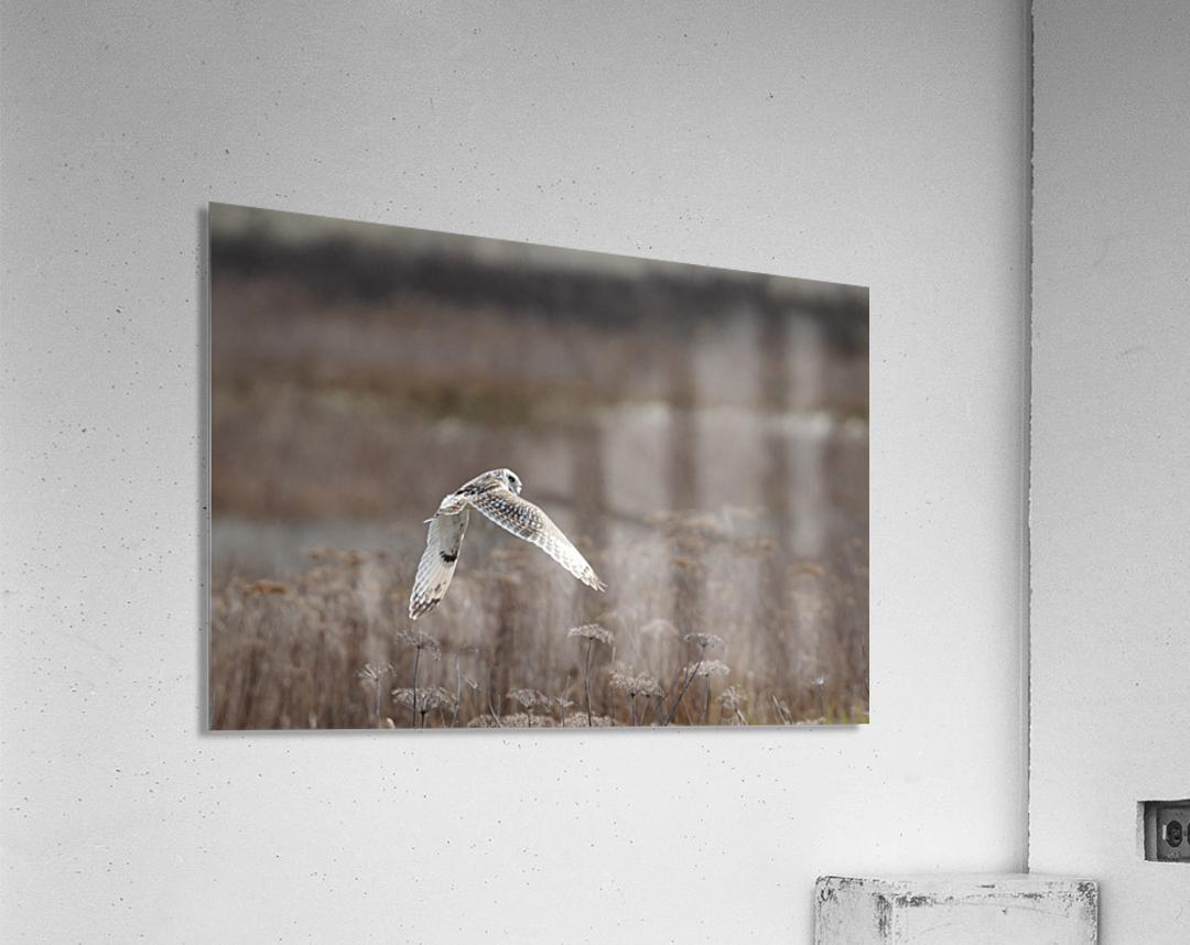 Wesley Allen Shaw 02353  Acrylic Print