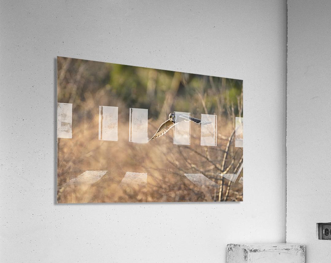 Wesley Allen Shaw 08787  Acrylic Print