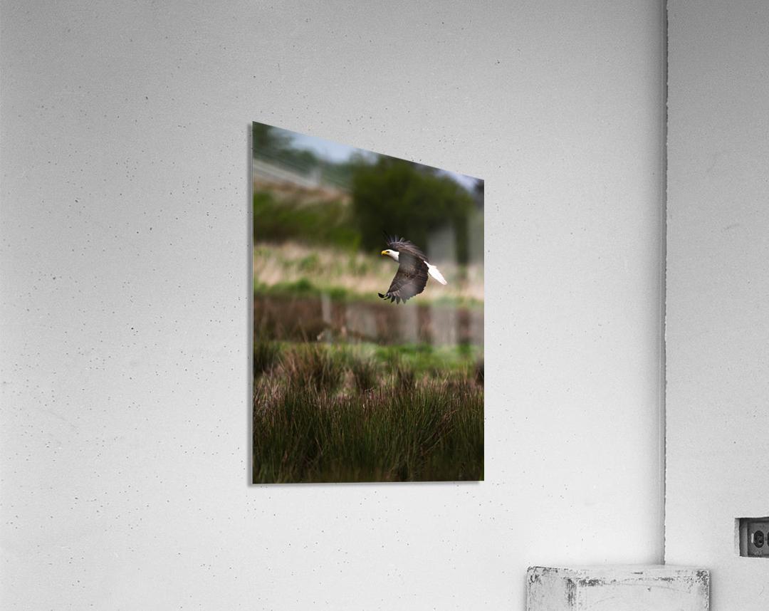 Wesley Allen Shaw 04650  Acrylic Print