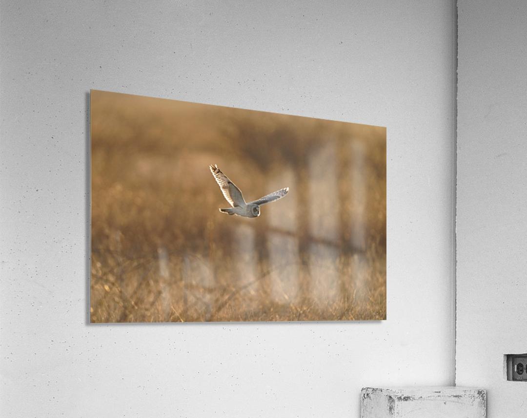 Wesley Allen Shaw 09047  Acrylic Print