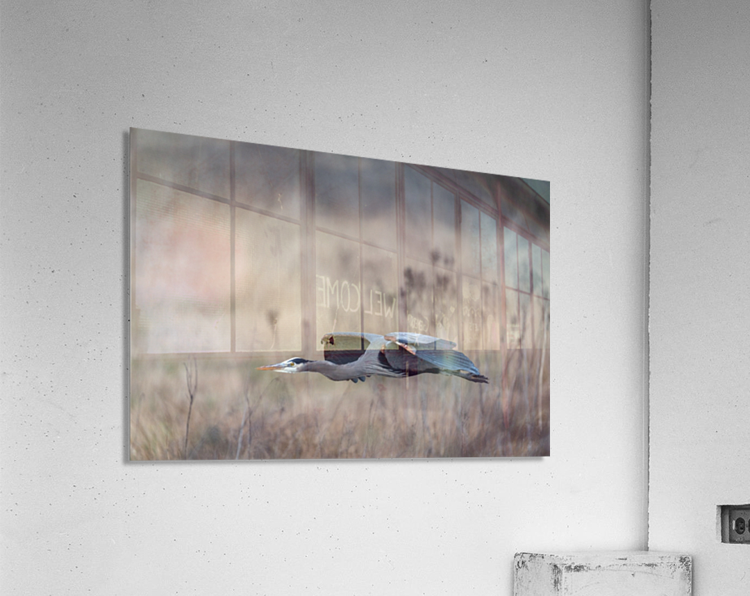 Wesley Allen Shaw 09384  Acrylic Print