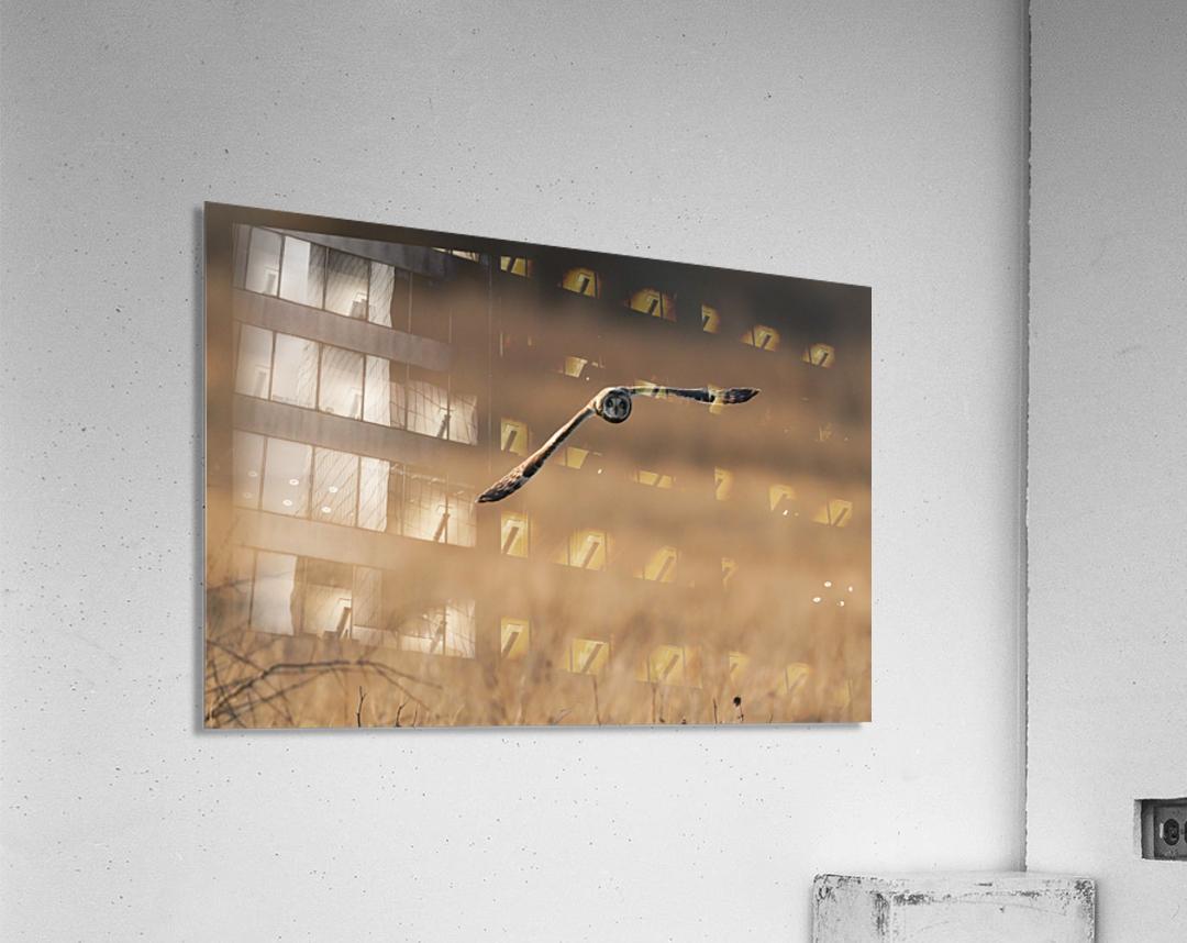 Wesley Allen Shaw 08720  Acrylic Print