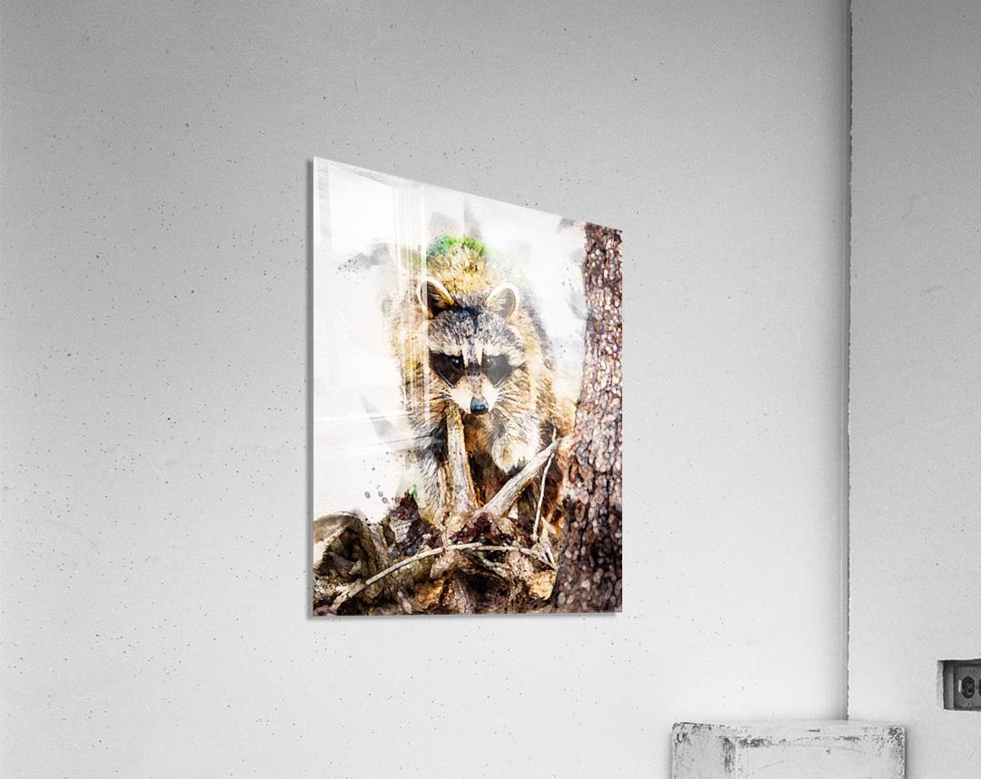 Raccoon In The Woods  Acrylic Print