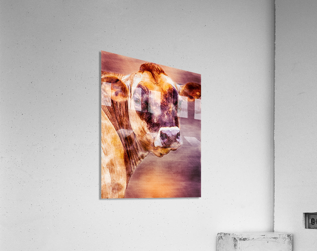 Beautiful Dairy Cow  Acrylic Print
